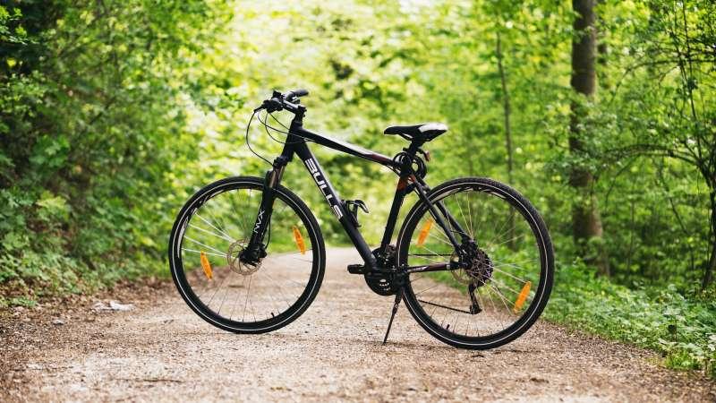 forest-bike-bulls-100582