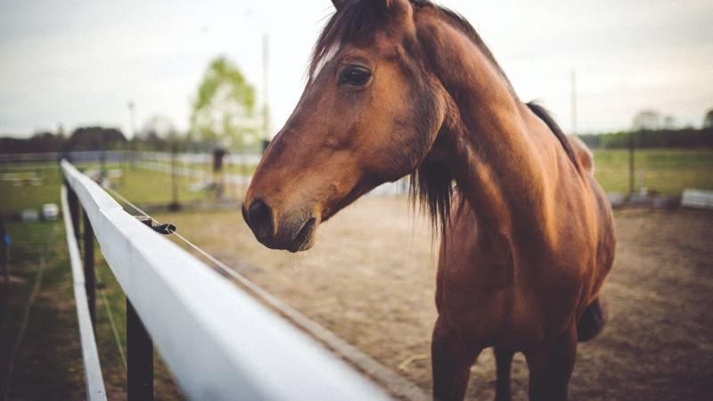 hotel-castelvecchio-horse-4